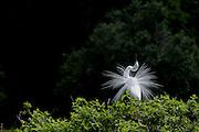 Cypress Wetlands, Port Royal South Carolina