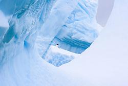 Lonely Gentoo Penguin (Pygoscelis papua) on ice in Antarctica