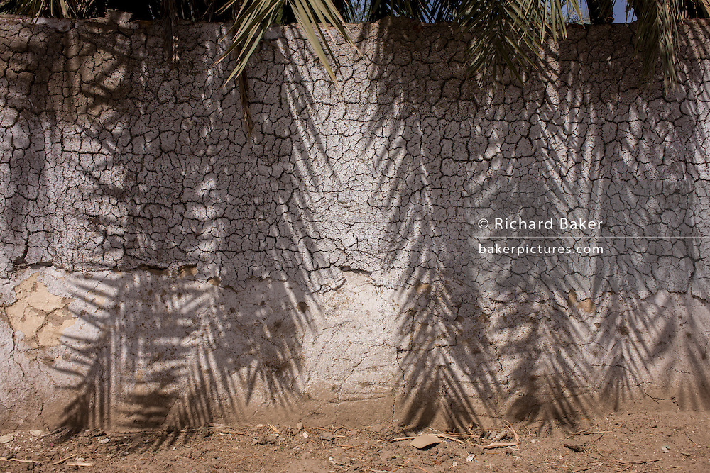 Mid-day shadows of date palm tree branches seen on the white plaster of a mudbrick wall in a village near Medinet Habu on the West Bank of Luxor, Nile Valley, Egypt.