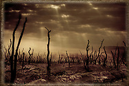 Sepia tone of burnt trees on a parched landscape dappled by sunlight shining through holes in the clouds.