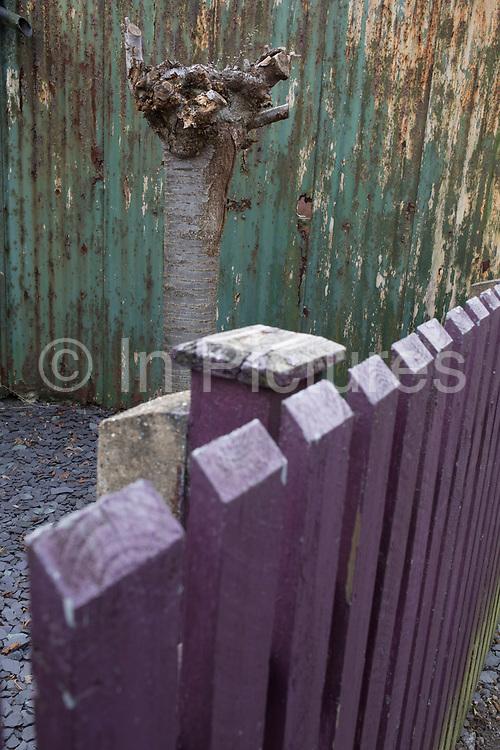 Strange urban landscape of a tree, fence and wall in Birmingham, England, United Kingdom.