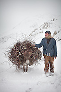 A Wakhi teenager gathering woods several hours away from his village. Deforestation. Between Zardibar and Sarhad village, end of expedition...Trekking back down from the Little Pamir, with yak caravan, over the frozen Wakhan river.