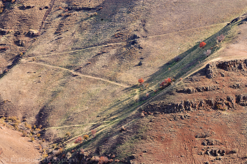An old trail switchbacks up the side of the canyon colored with autumn in the Grande Ronde River Canyon, Oregon, USA The grassy slopes have the pattern of livestock grazing paths.