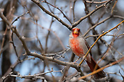 Birding near Benson, AZ