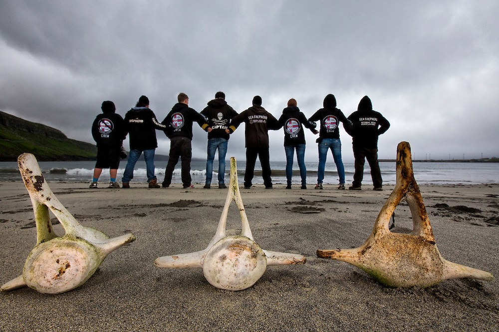 """Sandoy, Faroe Islands.<br /> <br /> Sea Shepherd volunteers stand together-locked arm in arm with Peter Hammarstedt, in front of Pilot whale vertebrae which were found on the beach on one of Sandoy Island's pilot whale 'killing beaches.'<br /> <br /> Sea Shepherds volunteers number over 500 in the Faroe Islands during the summer campaign, """"Operation Grindstop 2014.""""  Volunteers come from all over the world; they are self proclaimed Vegans, and pay their way to spend anywhere from two weeks, to months protecting whales.  They sport the black hoodie with the Sea Shepherd logo, which announces their unmistakable presence in the islands.  They are willing to put their own lives in danger, to save the life of a whale--they are willing to die for the cause."""