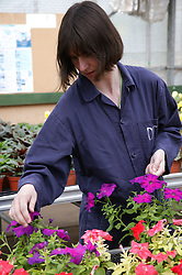 Woman with learning disability at work at Brook Farm; Linby; tending to flowers,