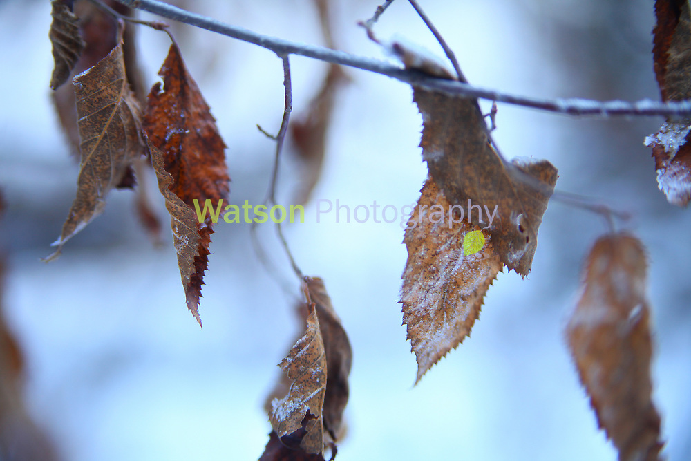 Frosted Beauties of Winter