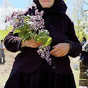 A villager holds a piece of lilac at the Measurement of the Milk Festival, Ieud, Maramures, Romania