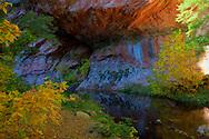 Beautiful colors along a creek - Oak Creek Canyon, AZ