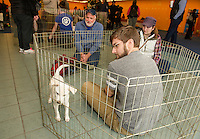 Timothy Zimmermann sits with a 9 week old Lab mix that will be joining their family during the NH Humane Society's Adopt a thon at the Belknap Mall on Friday morning.  (Karen Bobotas/for the Laconia Daily Sun)