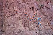 Peru - Monday, Dec 09 2002: Images from Tambopata Research Centre, Puerto Maldonado. (Photo by Peter Horrell / http://www.peterhorrell.com)