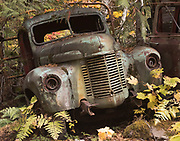An old truck sits abandoned and rusting in the woods of Willamette National Forest with Jawbone Flats near Opal Creek, Oregon