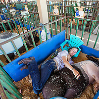 Rabeka Ellis, 18, of Madras spends some time relaxing with her pig Gus Gus after showing him during the first day of the Jefferson County Fair and Rodeo on Wednesday.