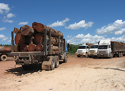 June 21, 2007 - U.S. - Trucks carrying lumber out of the Amazon rain forest wait to cross the Moju River June 21, 2007, near Tailandia, Brazil. Clandestine loggers have cut down much of the forest here. About 70 percent of deforested land in Brazil is used for grazing. Brazil is the world's fourth biggest emitter of greenhouse gases, largely due to deforestation. (Jack Chang/TNS) (Credit Image: © Jack Chang/TNS/ZUMAPRESS.com)