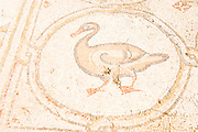 The Palace of the 'Bird Mosaic' a 14.5 x 16m floor of a villa dating to the Byzantine period, 6-7th century CE. Caesarea, Israel Duck detail