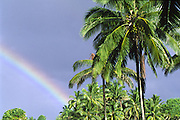 Rainbow with palm trees<br />
