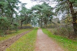 Zwarte Berg, Hilversum, Noord Holland, Netherlands