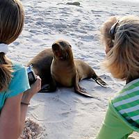 South America, Ecuador, Galapagos Islands. Family fun watching sea lions on Mosquera Island in the Galapagos.