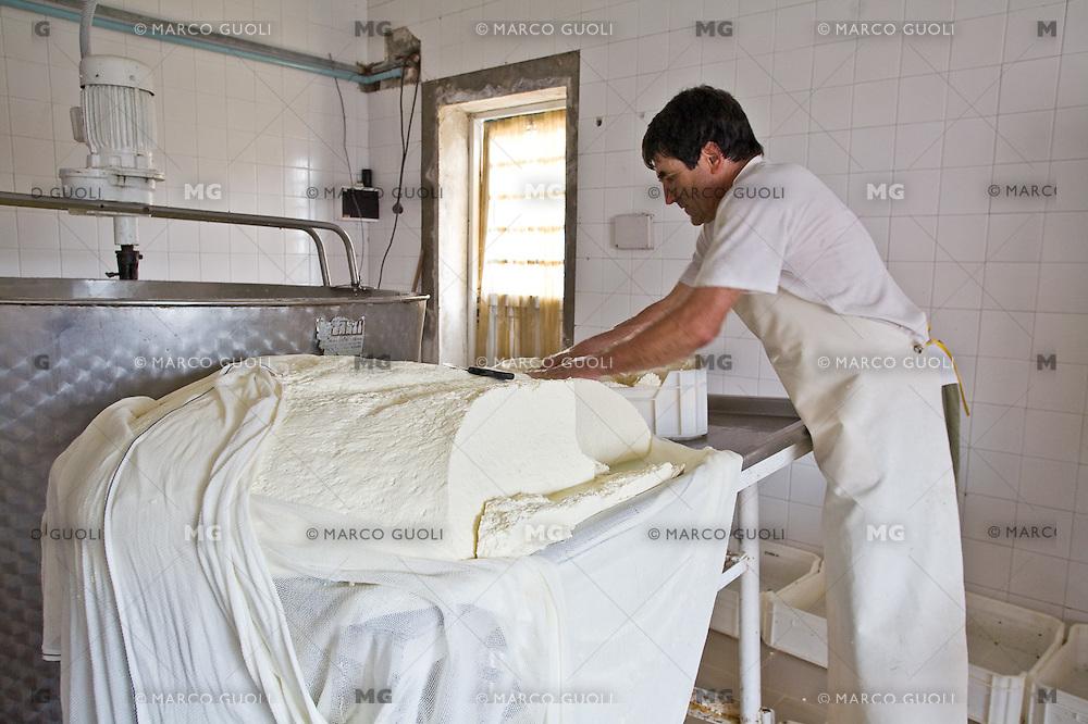 PREPARACION DE LA MASA DE QUESO EN UN TAMBO, CARMEN DE ARECO, PROVINCIA DE BUENOS AIRES, ARGENTINA
