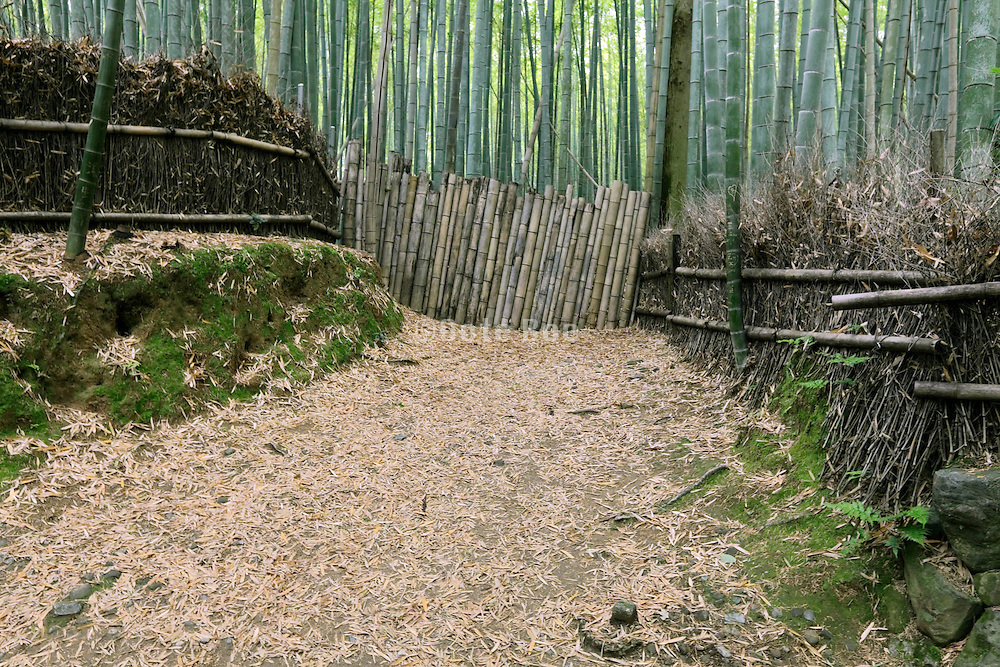 path in bamboo grove blocked with bamboo stalks Japan