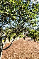 Rua com árvores frutíferas. Mondaí, Santa Catarina, Brasil. / <br /> Street with fruit trees. Mondaí, Santa Catarina, Brazil.