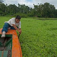 Wilder, a Yanayacu  Indian guide pushes through water hyacinth as he helps to navigate a tourist boat up the Yanayacu River in Peru's Amazon Jungle.