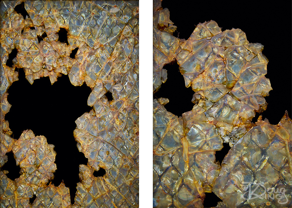 """To purchase this Limited Edition Print, please use the link in the menu.<br /> <br /> I was just drawn to the iridescence of this broken and corroded Georgian wired glass window. In the end I decided upon a diptych of two shots, a close up in conjunction with a wider shot as I loved the balance of positive and negative spaces between the two.<br /> <br /> Diptych <br /> Acrylic Gallery Print 15"""" x 10""""<br /> Limited Edition of 15<br /> <br /> £300 + shipping"""