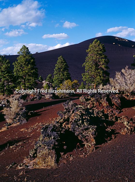 Ponderosa pines growing on black cinder cones, Sunset Crater National Monument, Arizona.