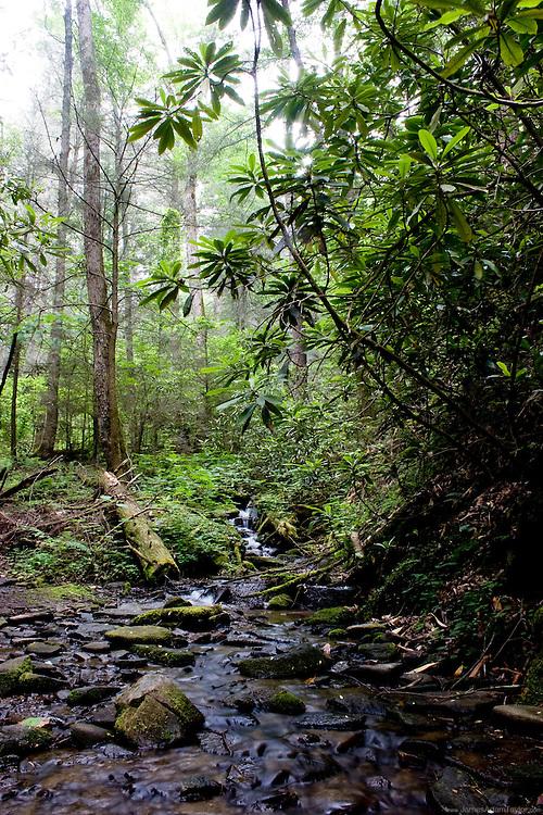 Water flows through a rocky stream bed, Smokey Mountains National Park, North Carolina