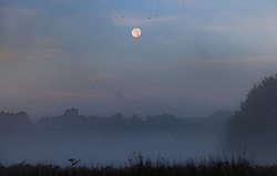 © Licensed to London News Pictures. 22/09/2021. London, UK. The full harvest moon sets over a misty Richmond Park the first day of autumn. Warm temperatures have heralded the start of the autumn season this week. Photo credit: Peter Macdiarmid/LNP