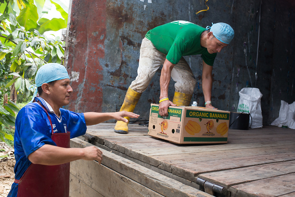 David Domauri, left, passes boxes of packed bananas to a lorry driver on an ASOGUABO banana farm in southern Ecuador.