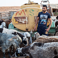 A farmer gives water to his sheep in Tubas district in the northern part of the West Bank. <br /> <br /> Despite there being nearby wells that pump water into Israeli settlements, Palestinians are denied access to the water network here and have to buy all their water from tankers. This is roughly four times more expensive than buying water from the network, because of the cost of the tanker transport.<br /> <br /> This is Area C, which is completely under Israeli military control, no building is allowed - not one stone on top of another - and if buildings are erected they are quickly demolished by the Israeli military. Consequently, farmers are obliged to live in tents. This farmer made it clear that he is not a Bedouin, and didn't like being called a Bedouin as he is not from a nomadic tradition, he is a farmer who is not allowed to build farm buildings, have an irrigation system like his Israeli neighbours, or be connected to the water network.