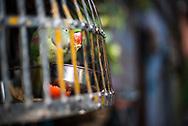 Bird cage on the streets of Varanasi, Uttar Pradesh, India