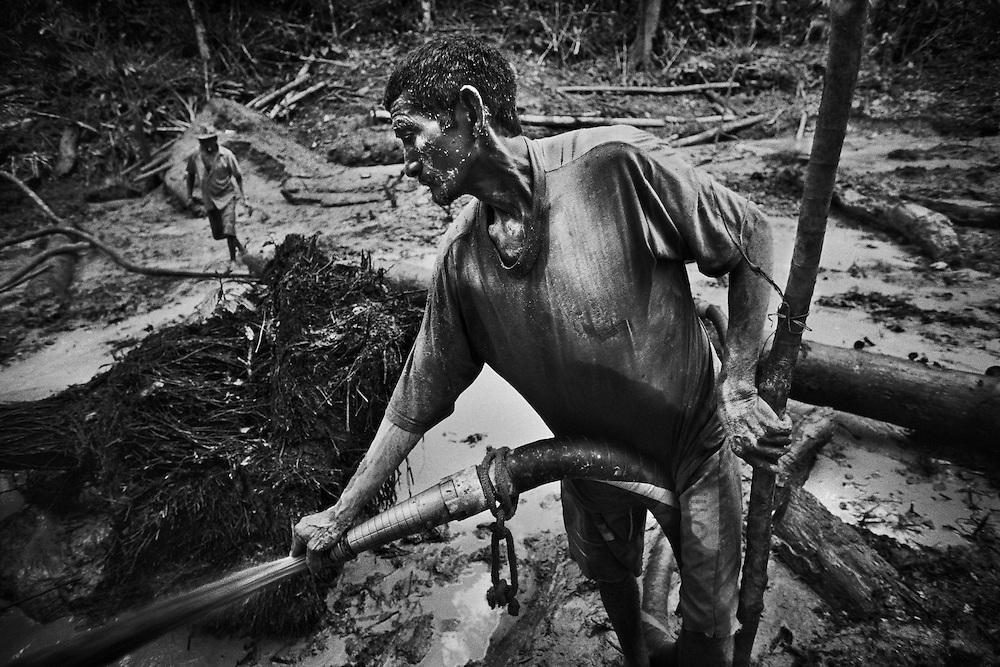 Brazil, Amazonas, Eldorado do Juma.<br /> <br /> Grota Ze da bolsa, garimpeiros.<br /> Eldorado do Juma est maintenant un bidonville de plastique noir et de misere croissante sur la rive du fleuve, qui attire les prospecteurs. Des centaines d'hommes y creusent la boue sur leurs petites parcelles delimitees par des branchages et des ficelles. A la fin du jour, les plus chanceux auront trouve quelques poussieres d'or, vendues ensuite 40 reals le gramme (14,5 euros) a Apui, 65km au nord. Les plus riches du coin sont ceux et celles qui cuisinent, nettoient ou divertissent les mineurs.<br /> Il y a trop de prospecteurs pour la teneur du filon, du coup les garimpeiros s'eparpillent sur une surface qui couvre plus de 40 hectares. Tous les mineurs dependent de l'autorisation d'une cooperative de proprietaires pour travailler. Ces proprietaires ne possedent pourtant pas de titre foncier pour justifier leur etat, ils sont simplement arriver les premiers sur les parcelles : c'est la loi de l'or.<br /> Quatre mois apres le debut de cette ruee, la plupart du minerai qui peut etre extrait manuellement a ete trouve, les mineurs qui restent sont les survivants de la rumeur. Ils n'ont souvent plus rien et esperent seulement trouver de quoi payer le voyage pour aller tenter leur chance vers d'autres terres promises.
