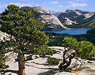 Lake Tenaya Seen From A Nearby Peak, Yosemite National Park, California, USA