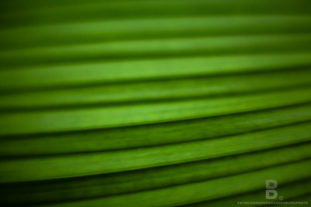 The lines of a clean green leaf photogrpahed with a macro, close-up lens.