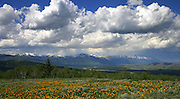 Looking north from the southern toe of Jackson Hole with Arrow Leaf Balsam Root in the foreground.