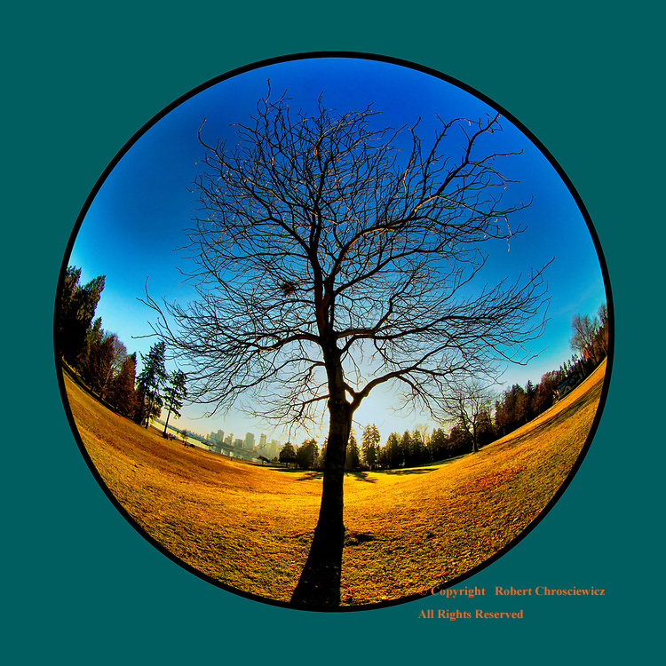 Barren (on Teal): A fisheye lens captures this solitary, barren tree in Stanley Park, in silhouette with its shadow radiating straight away from it, with the ocean and down town in the background, Vancouver British Columbia Canada.