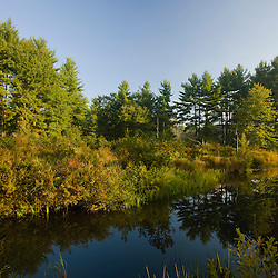 A beaver flowage on the Isinglass River in Strafford, New Hampshire.