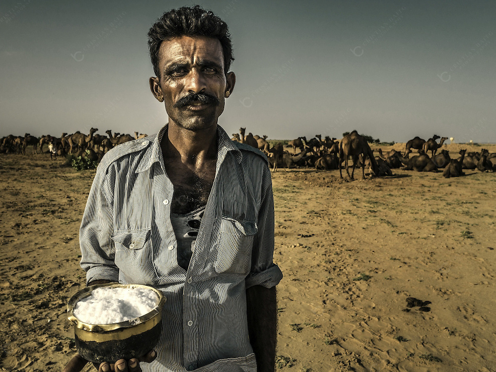 A man holding a bowl with fresh camel milk and behind his herd of camels in the Thar desert near Jaisalmer Rajasthan India. This arid region in the northwestern part of the Indian subcontinent between India and Pakistan covers about 320,000 km2 with 60% of those in the Rajasthan state. Many people depend on animal husbandry for their livelihood. Camels are used for the tourist industry were camel rides for one or more days are offered to tourist with night stays in the desert. Camels are still used as a transport animal because of its toughness a strength