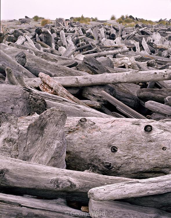 Driftwood, Gold Bluffs Beach, Prairie Creek Redwoods State Park, Redwood National Park, California