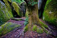 France, Finistère (29), parc naturel régional d'Armorique, Huelgoat, chaos granitique de la forêt de Huelgoat // France, Finistere (29), regional natural park of Armorique, Huelgoat, granite chaos of the forest of Huelgoat