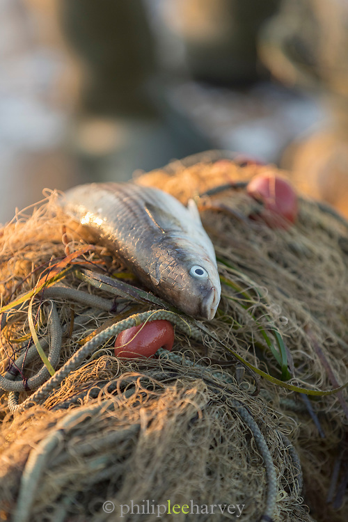 Close up of dead fish on pile of fishing nets at sunrise, Skala Kallonis, Lesbos, Greece