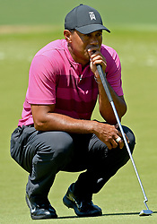 May 3, 2018 - Charlotte, NC, USA - Tiger Woods looks over his putt on the 7th green during he first round of the Wells Fargo Championship at Quail Hollow Club in Charlotte, N.C., on Thursday, May 3, 2018. (Credit Image: © Jeff Siner/TNS via ZUMA Wire)