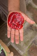 A craftsman demonstrates the red color from crushed cochineal bugs used to dye yarn for making carpets in the village of Teotitlan de Valle in the Oaxaca Valley, Mexico.
