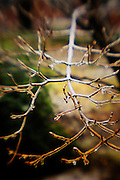 bare tree limb with ice, lens baby, colorized trees