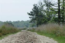 Oisterwijk, Noord Brabant, Kampina