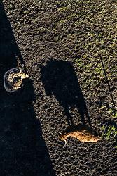 THEMENBILD - Hochlandrinder auf einer Weide, aufgenommen am 28. Maerz 2019 in Kaprun, Oesterreich // Highland cattle on a pasture in Kaprun, Austria on 2019/03/28. EXPA Pictures © 2019, PhotoCredit: EXPA/ JFK