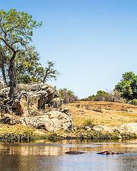The Hippo pond, Kruger National Park