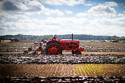 © Licensed to London News Pictures. 08/09/2016. York UK. Picture shows 15 year old Ellie Bullard driving her 1957 Nuffield 4DM tractor at the 66th British Ploughing Championship that has got under way today at Crockey Hill Farm near York. The event will see 250 ploughmen & one woman from throughout Great Britain taking part who will then compete in the 63rd World ploughing championships at the weekend. Photo credit: Andrew McCaren/LNP